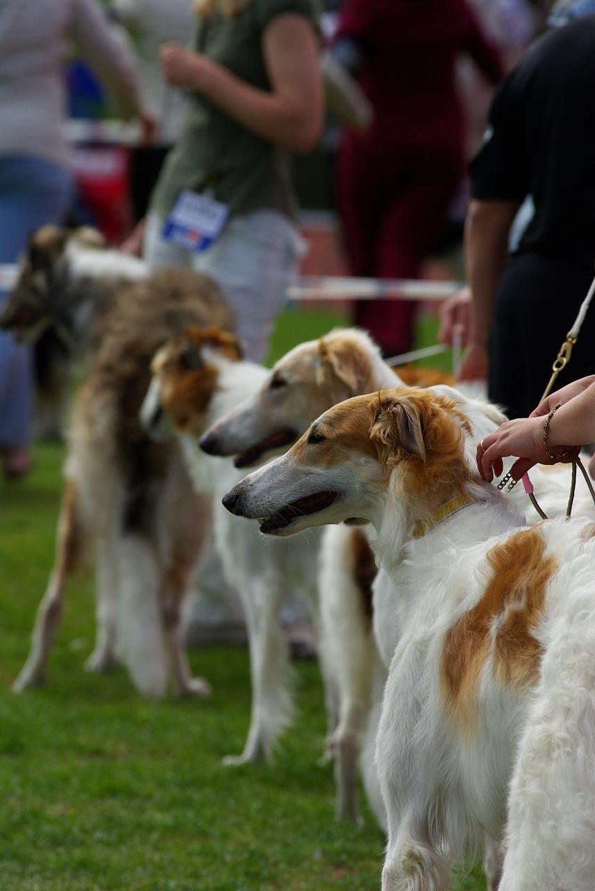 Kutyakiállítás kisokos